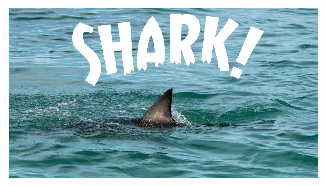 59-shark